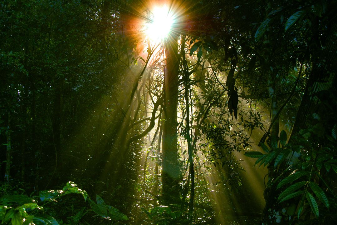 jungle sunlight